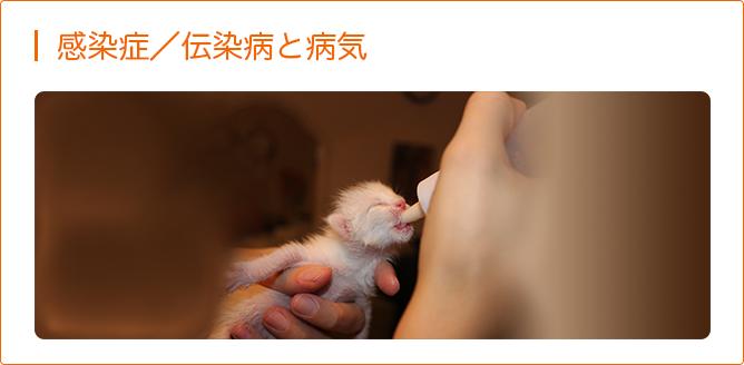 感染症/伝染病と病気<猫>