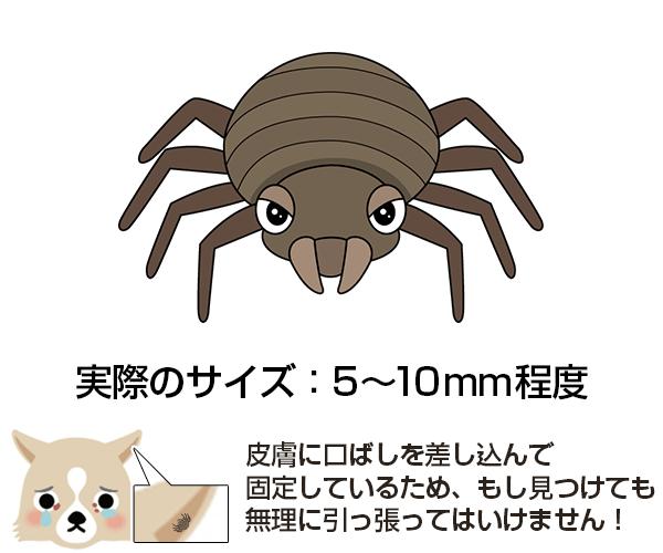 ダニ(マダニ)