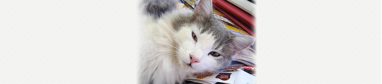 猫ヘルペスウイルス (猫ウイルス性鼻気管炎)