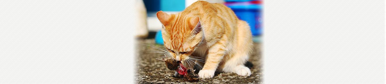 ネコカリシウイルス (猫カリシウイルス感染症)