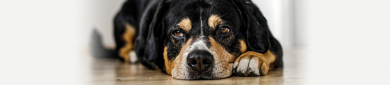 アレルギー・アトピー・湿疹(犬)