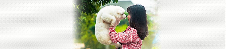 犬アデノウイルス(犬伝染性肝炎、犬アデノウイルスⅡ型感染症)