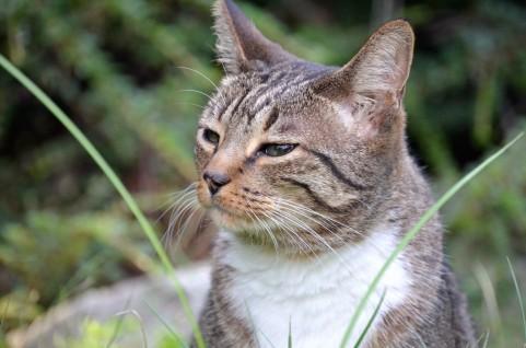 猫風邪など考えられる感染症の種類