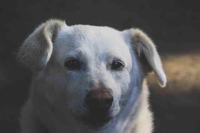 鼻水が出る原因(犬)