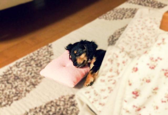 犬の臭いトラブル