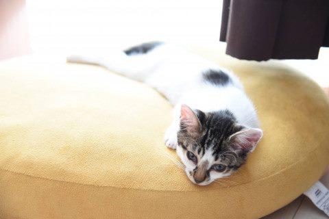 リラックスする、うちの猫