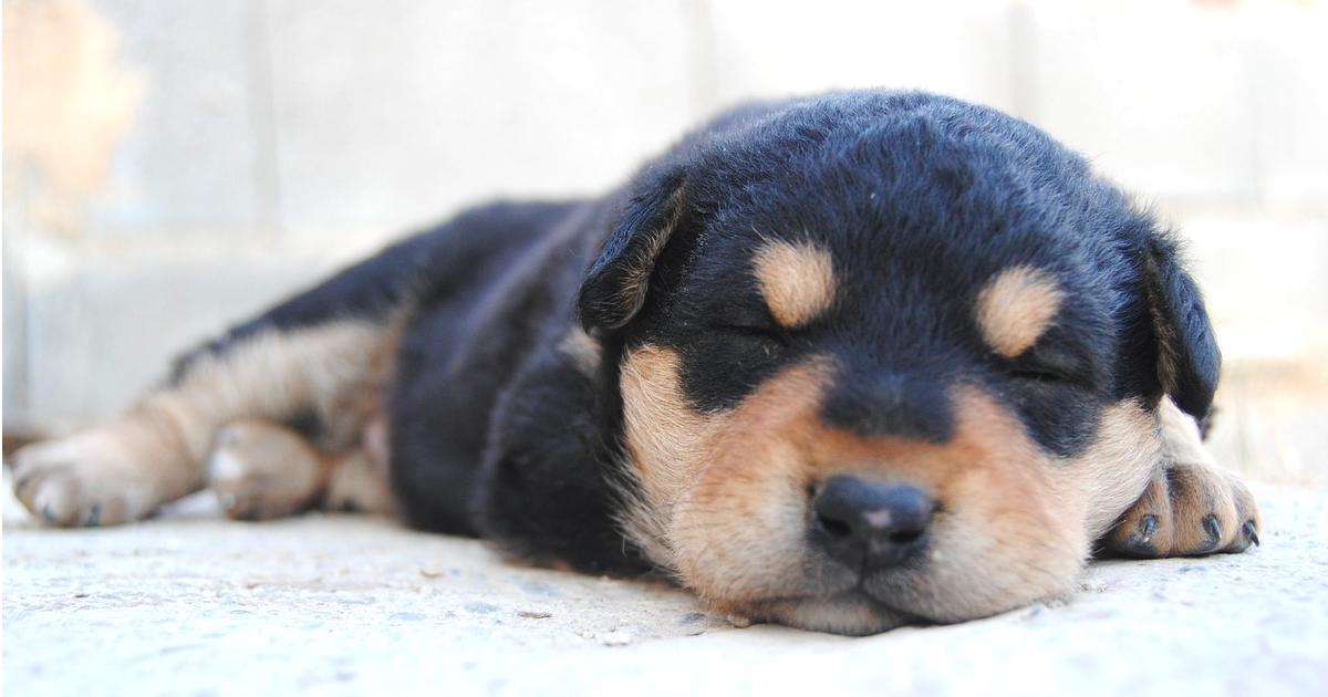 犬も夢を見るの?寝ている時に注意すること