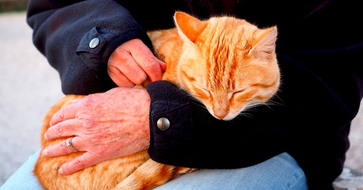 愛猫を長生きさせる方法とは!?