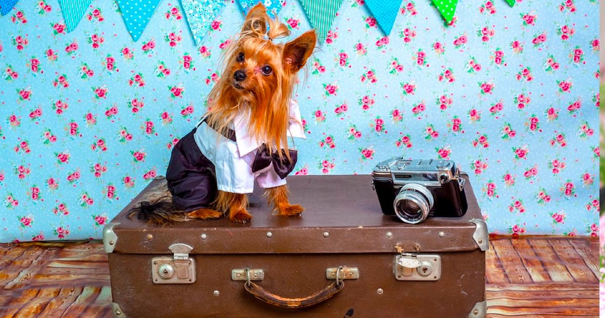 長期休暇は愛犬と旅行!しっかりとマナーを守りましょう