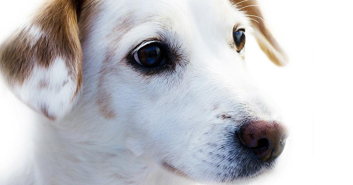犬の体温ってどのくらい?