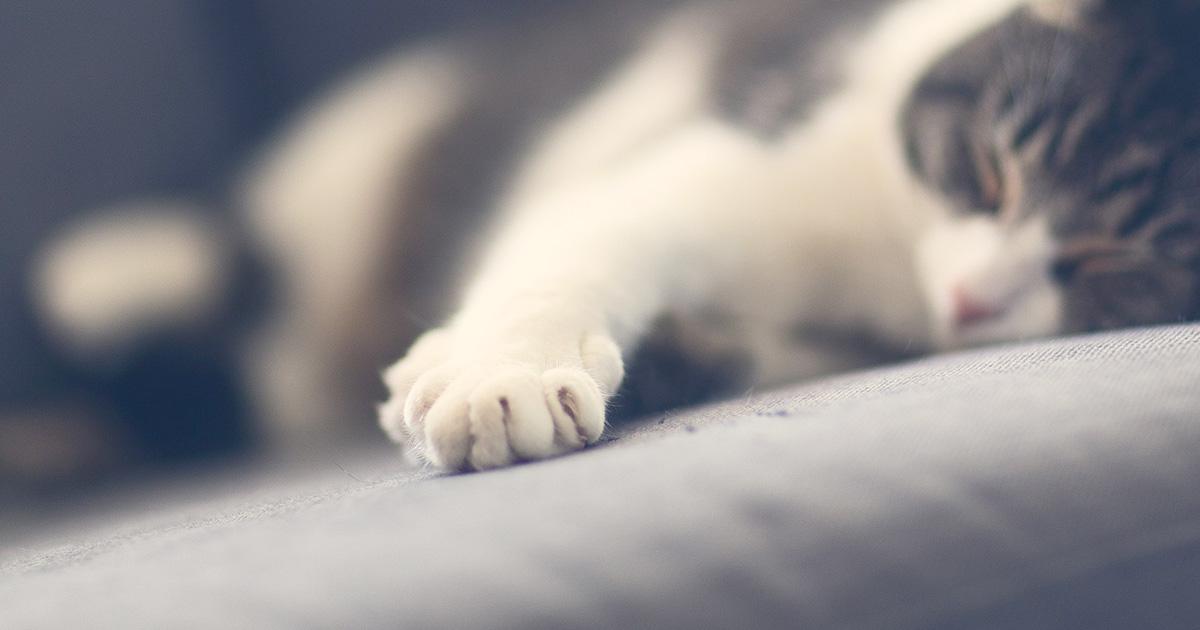 猫の爪とぎ用具を交換する時の注意点は?