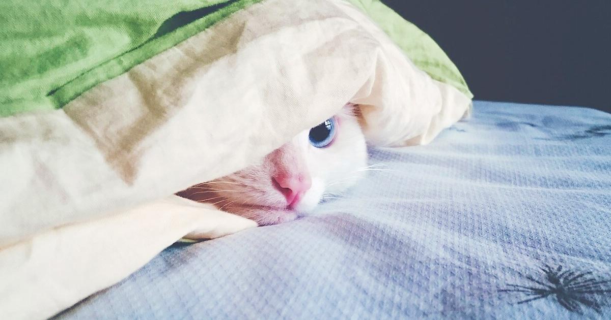 猫も風邪をひくの