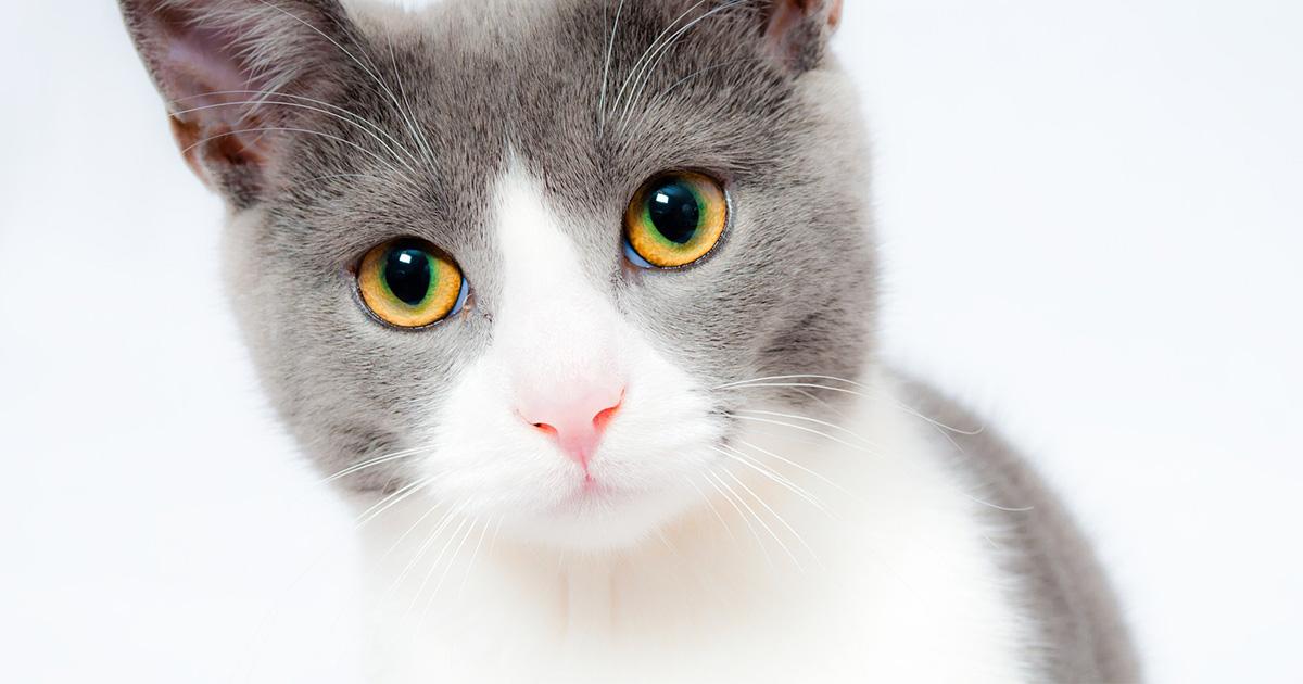 猫のマイクロチップって