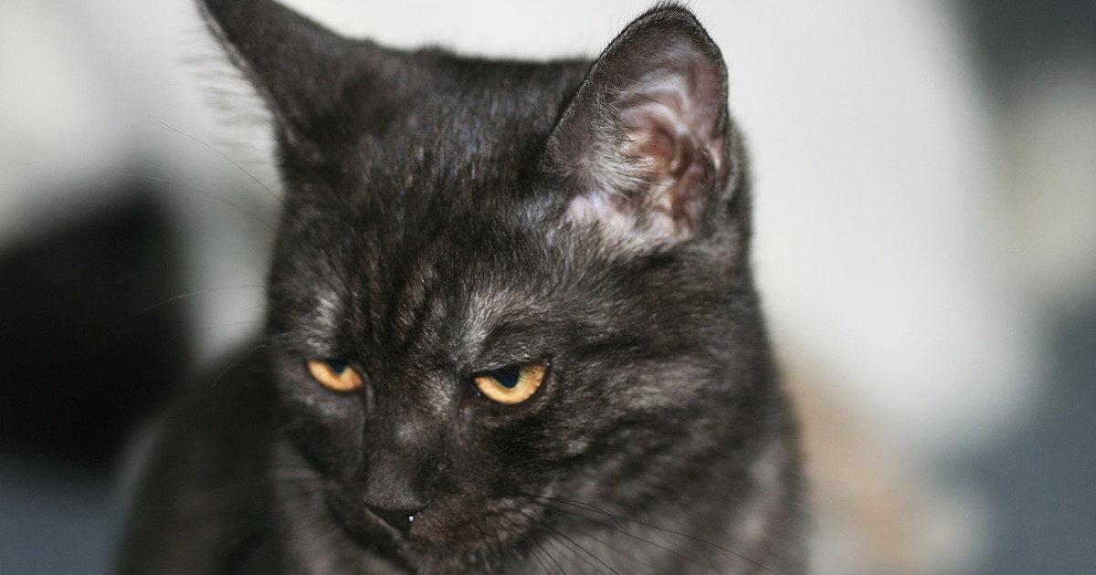 お耳、痒いの? 飼い猫が耳を痒がっていたら・・・