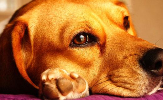 愛犬の肉球