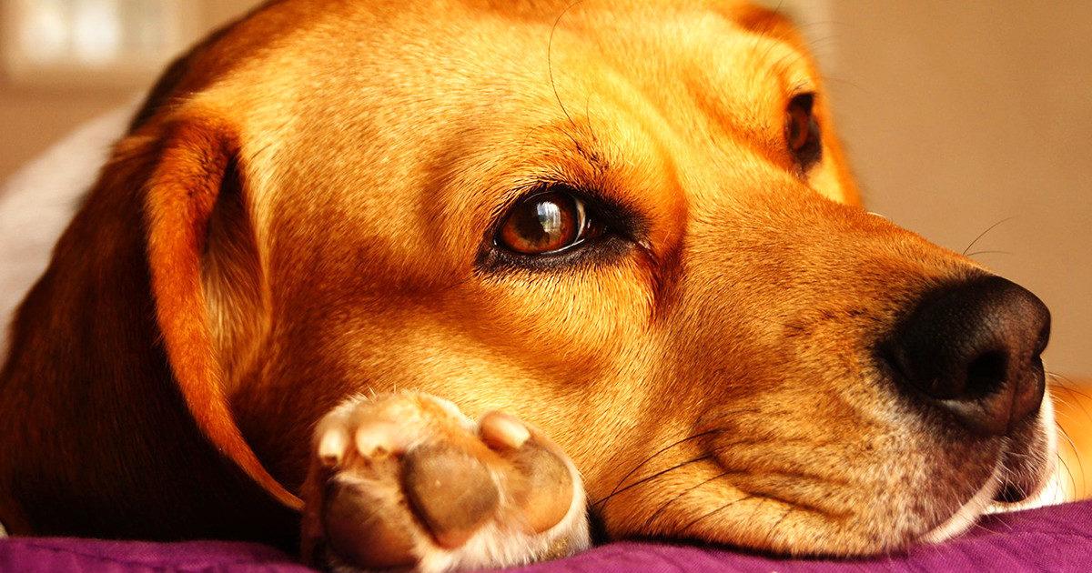 思わずニオイをかいでしまう愛犬の肉球、プニプニで癒やされます♪
