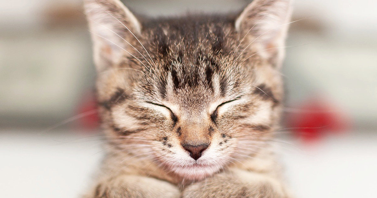 うちの猫の連続するくしゃみが心配です・・・。