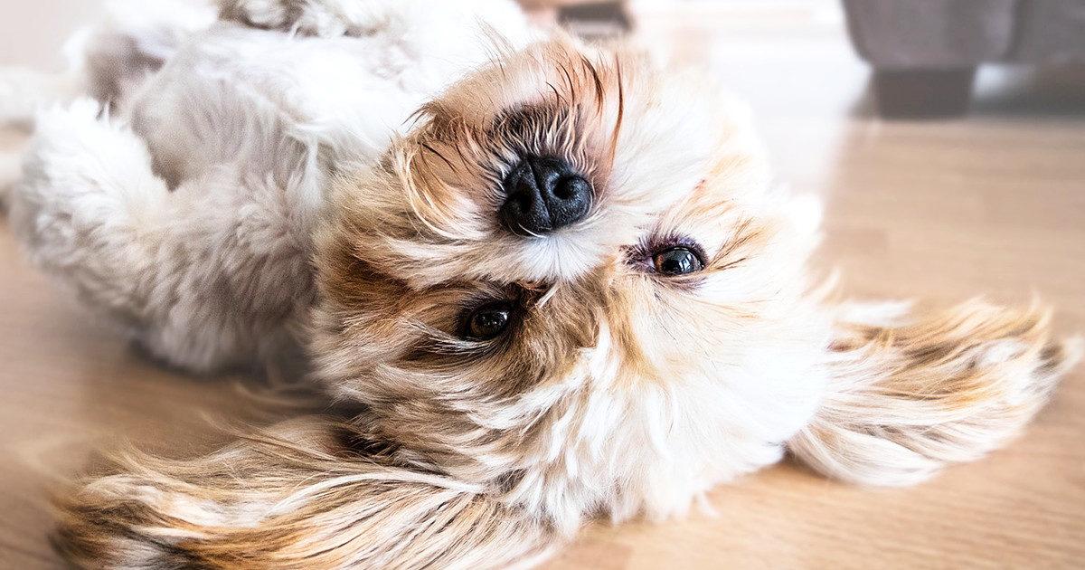 我が家の愛犬、口臭が・・・。