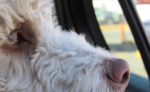 寒い季節の愛犬と一緒の車内、ニオイ対策どうしてる?