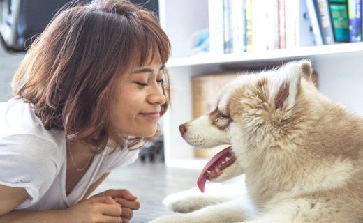 インフルエンザって、犬にも移るの?