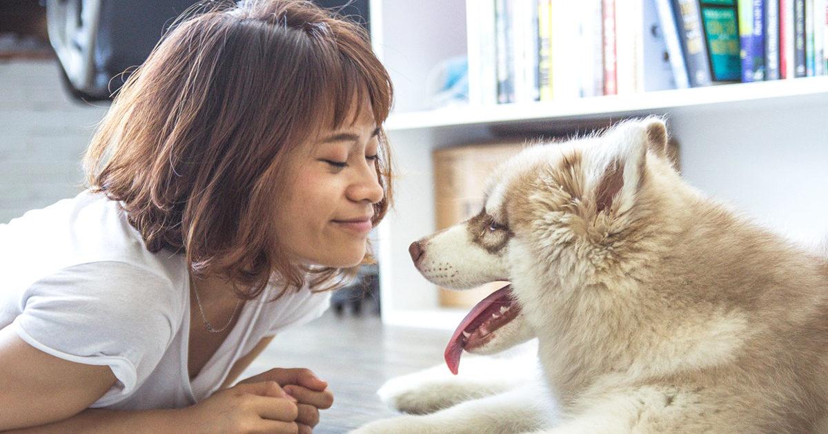 インフルエンザって、犬にも移るの?。
