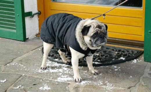愛犬との冬の散歩!気をつけるべきポイントは?