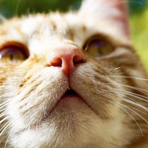 あれ?愛猫の鼻が乾燥してる!いつもは湿っていなかった?