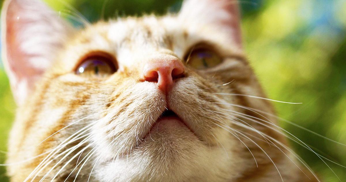あれ?愛猫の鼻が乾燥してる!いつもは湿っていなかった??