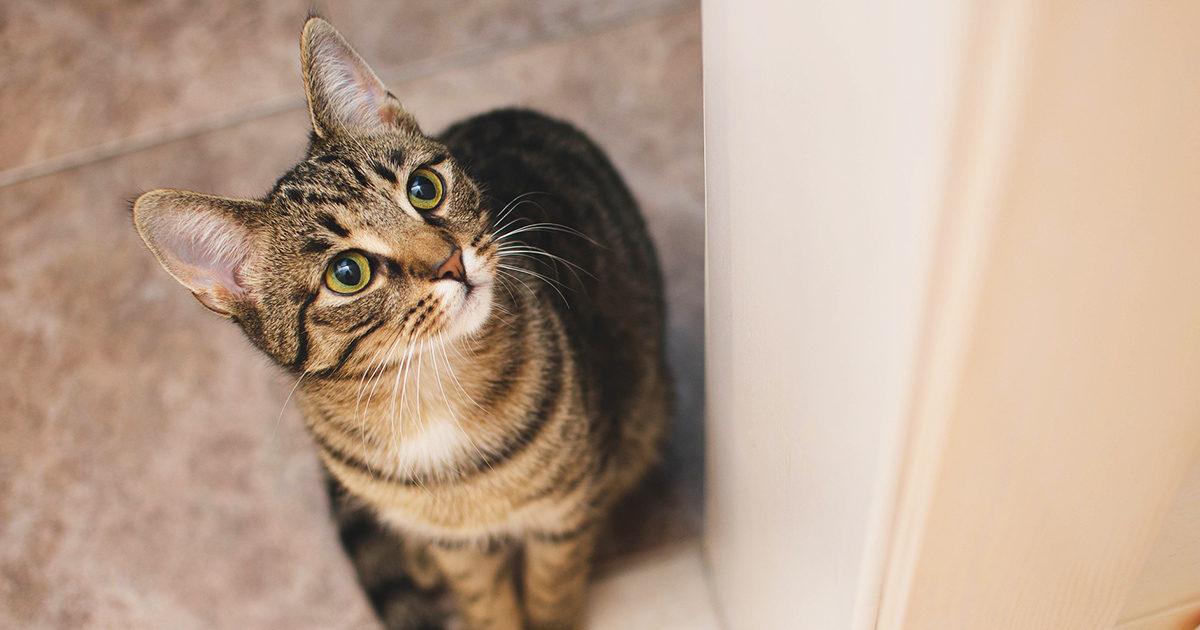 年末年始!愛猫のことで気をつけるべきポイントとは?