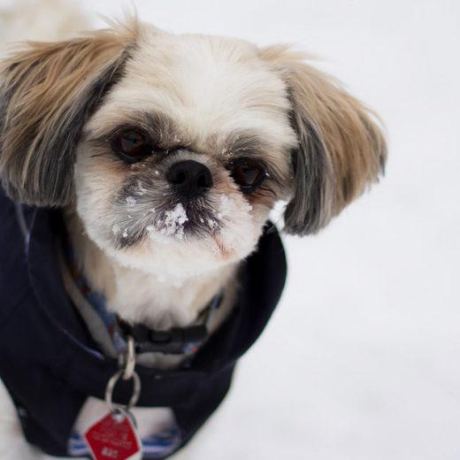 雪の日!愛犬とのお散歩で気をつけることは?