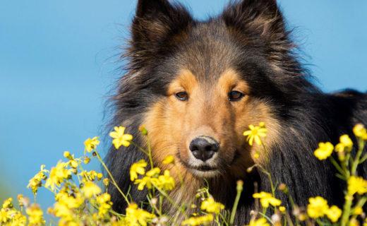 なんだか愛犬がむず痒そう!犬にも花粉症ってあるの?