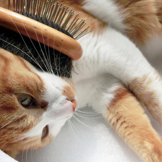 本格的な春までもうすぐ!愛猫の春のお手入れについて考えよう!
