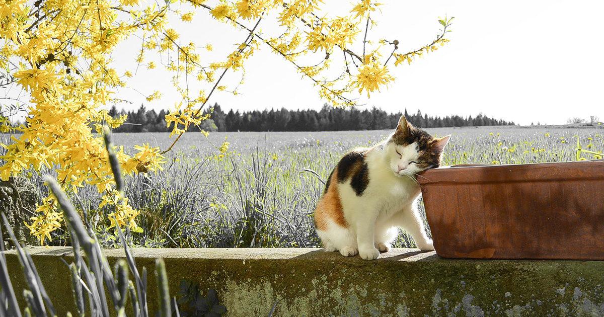 愛猫が自分で勝手に外に出て、お散歩してきます。