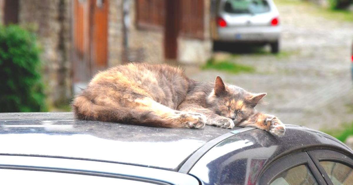 猫とお出かけしたい!猫も車酔いするの?