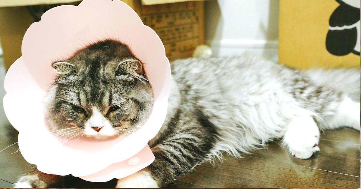 ペットの保険には入った方が良いの?