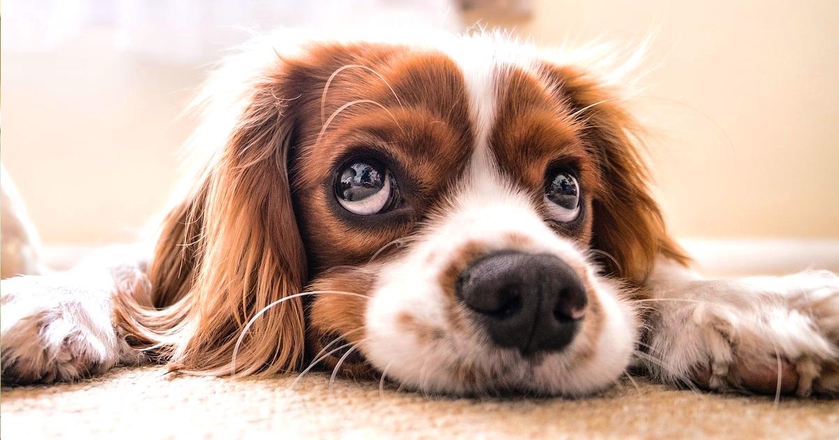 最近、愛犬の耳が臭います。これって何かの病気?