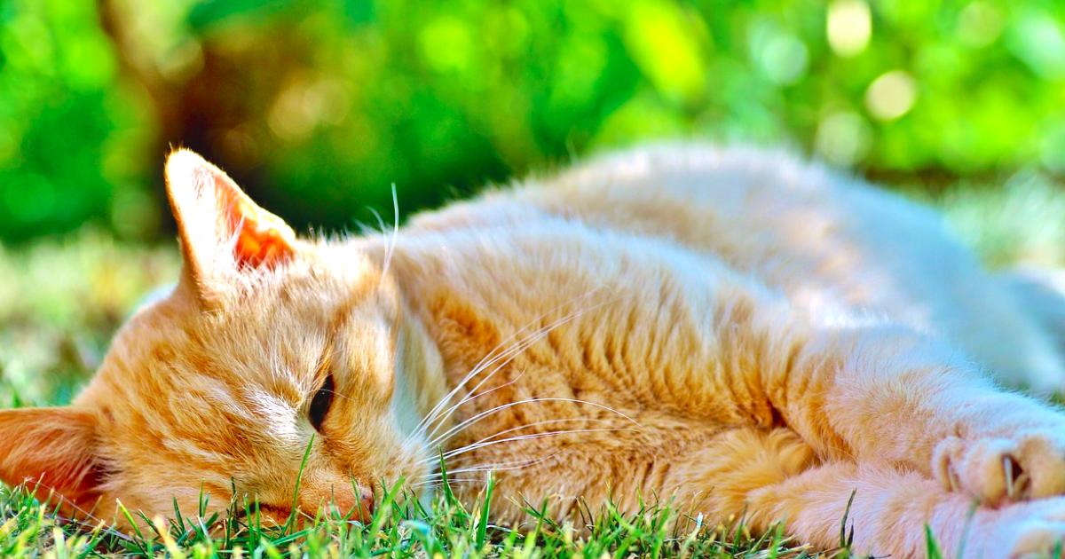なんだか気分が落ち込む「五月病」もしかして猫にもあるの!?