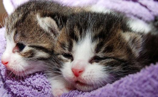 インフルエンザ蔓延中!人から猫、猫から人への感染は?予防法は?