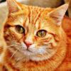 もしかして発情期?最近、うちの猫の様子がいつもと違って心配です。