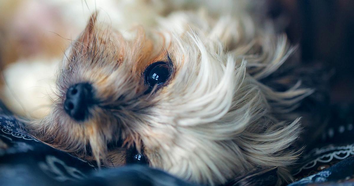 犬にアボカドを与えるのは危険