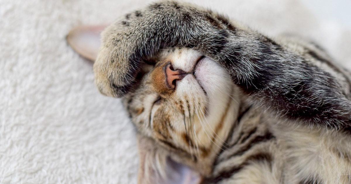 猫にも歯磨きは必要