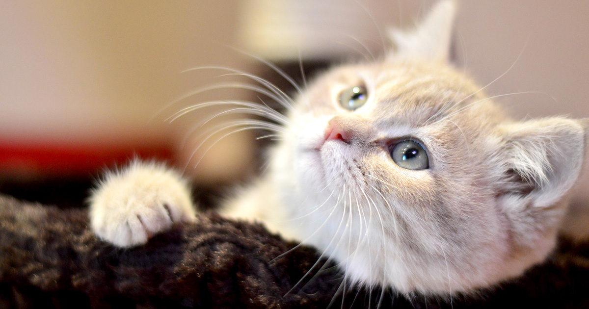 猫の夜泣き対処法は