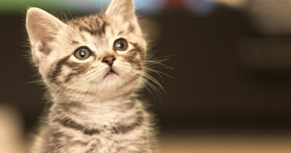 猫に必要な栄養素って