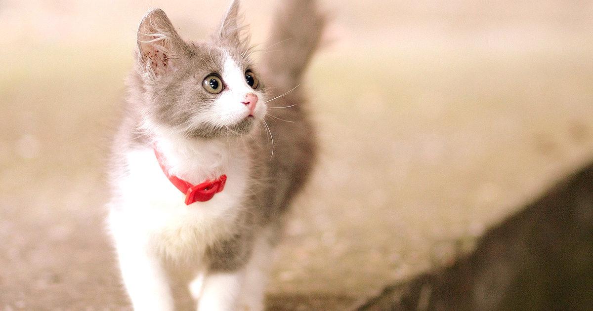 猫の毛色は変わるってホント