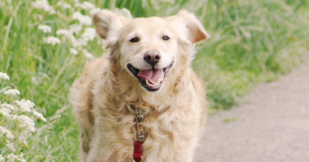 犬のストルバイト結石の治療法・予防は