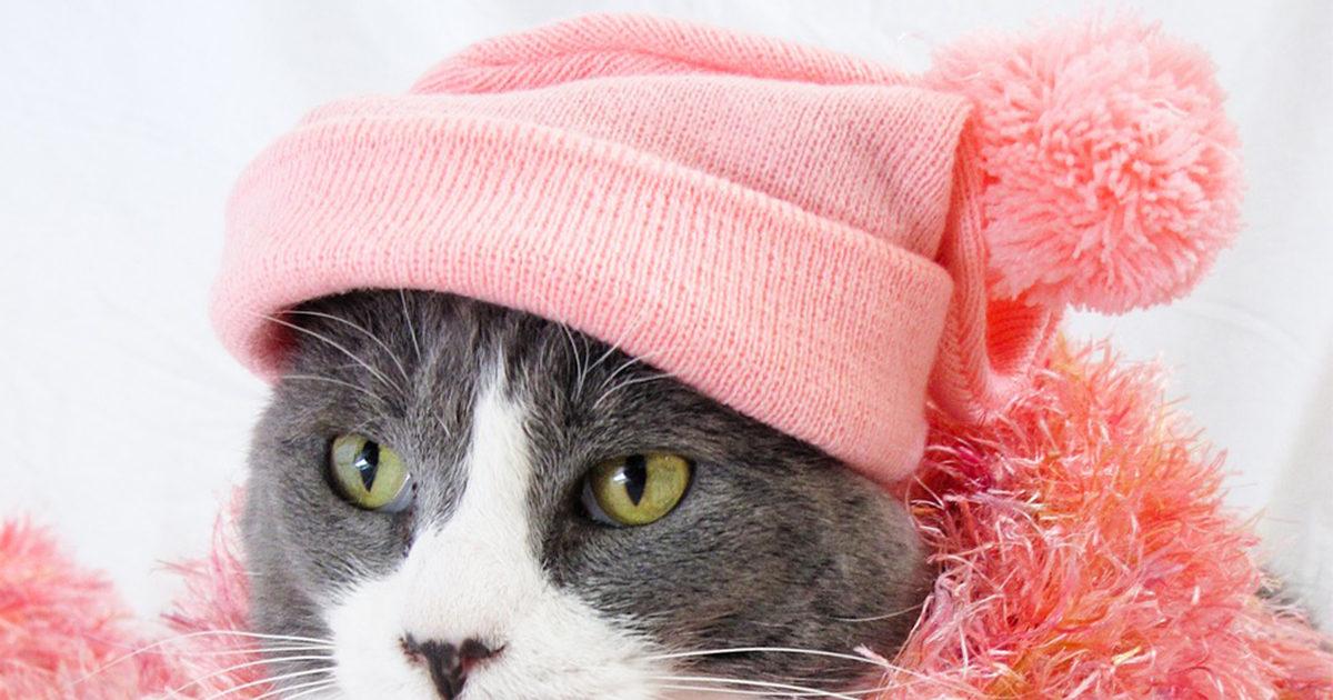 猫に服を着せる時に気をつけることは