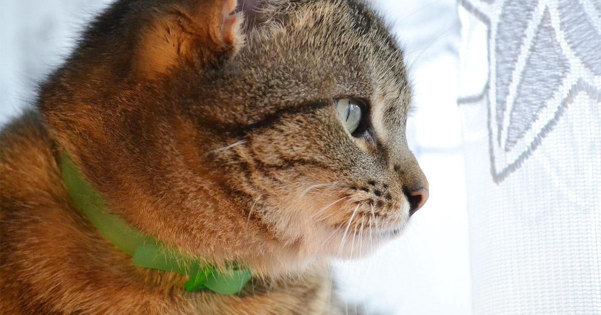 うちの猫は室内飼いだけど首輪って必要