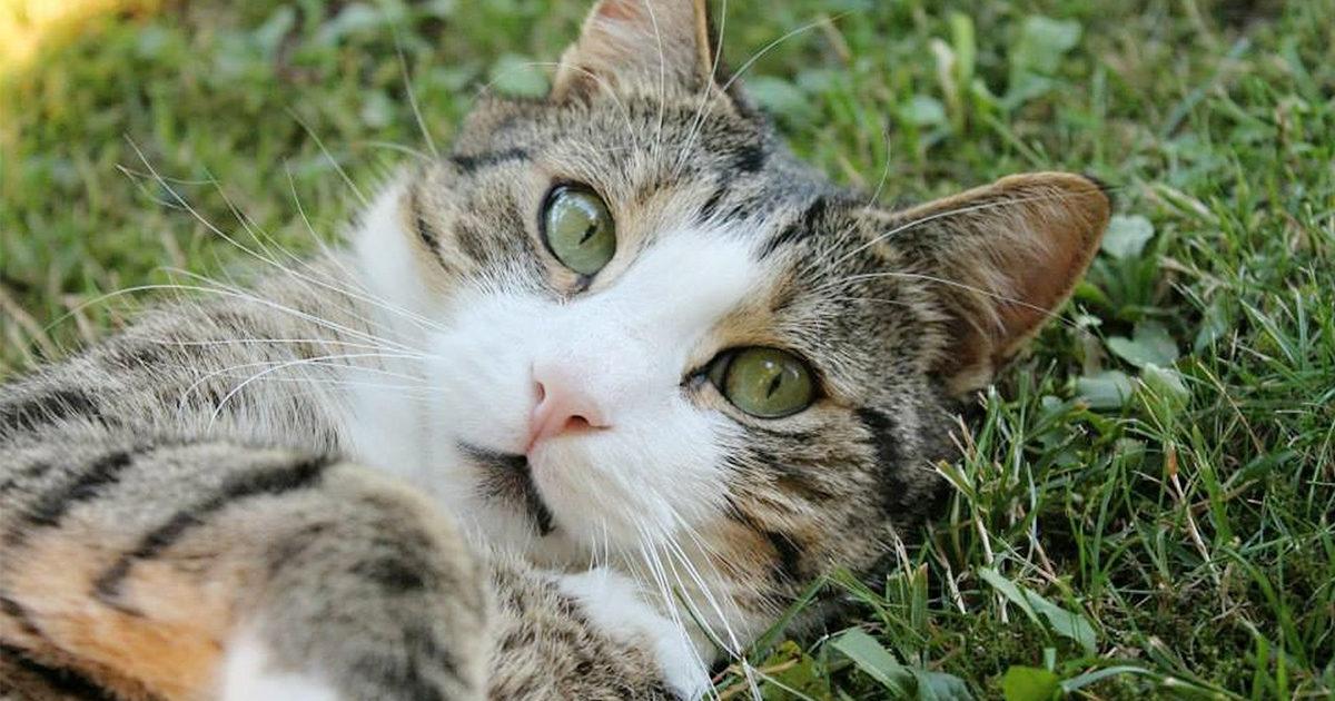 うちの猫蚊に刺されたら病気になる