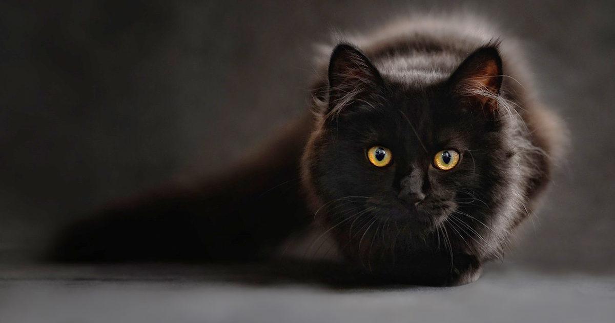 暗がりでも動き回るうちの猫。ちゃんと見えているのかな