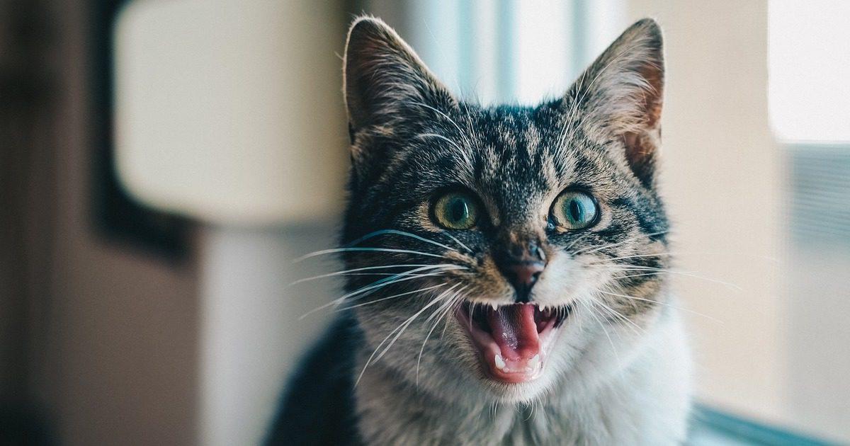 口臭、歯垢、歯茎の腫れ・・・これって歯周病の初期症状?